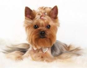 3 Самые популярные породы собак фото
