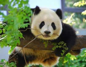 5 Лучших зоопарков мира фото