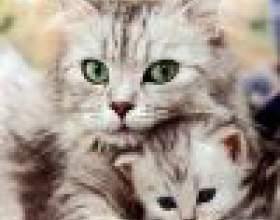 Авитаминоз у кошек фото