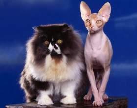 Бывают ли гипоаллергенные кошки фото