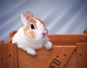 Чего ждать от года кролика фото