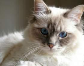 Чем опасна кастрация для кота фото