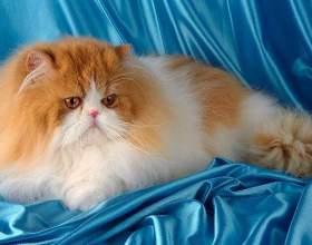 Чем вредна кошачья шерсть фото