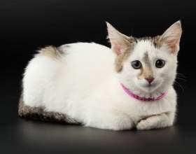 Через сколько после родов можно стерилизовать кошку фото