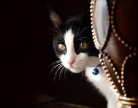 Что делать, если кошка просит кота фото