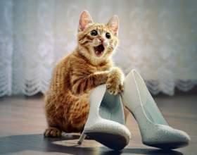 Что делать, если кот гадит в туфли фото