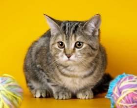 Что делать, если кот съел нитки фото
