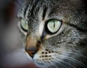 Что делать, если кота рвет желчью фото