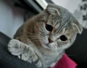 Что делать, если кота тошнит после еды фото