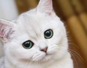 Что делать, если кошку тошнит фото