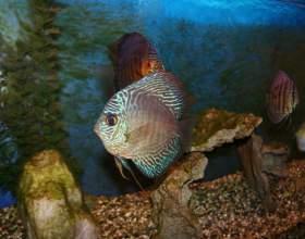 Как подменять воду в аквариуме фото