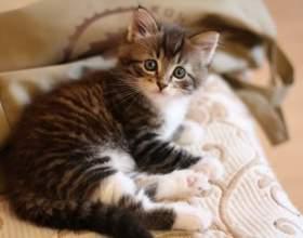 Что делать, если у котенка кал с кровью фото