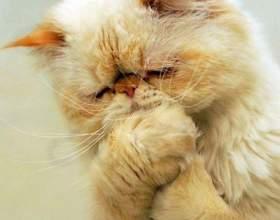 Что делать, если у котенка рвота фото
