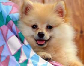 Что делать, если у собаки течка фото