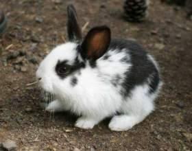 Что едят кролики фото