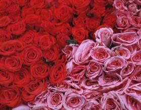 Что можно сделать с лепестками роз фото