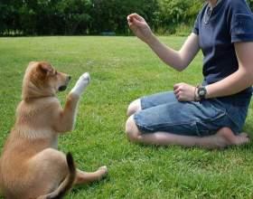 Что нужно, чтобы завести собаку фото