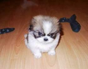 Что нужно для щенка в первые дни жизни фото