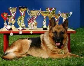 Что пишут в родословной собаки фото