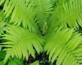 Что произошло с растениями в процессе эволюции фото