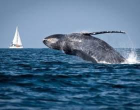 Что такое всемирный день океанов фото