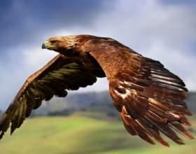 Для чего птицам перья фото