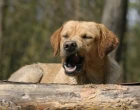 Если у собаки простуда фото