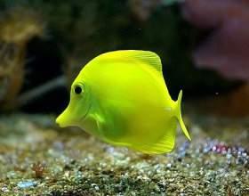 Есть ли сердце у рыбы фото