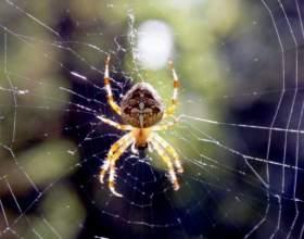 Где обитает паук-крестовик фото