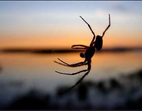 Где обычно в квартирах живут пауки фото