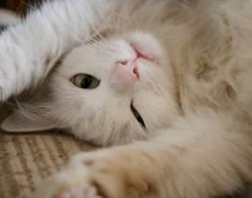 Хотят ли стерилизованные кошки кота фото