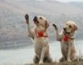 Игра - лучший метод обучения собак фото