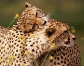 Испытывают ли животные настоящую любовь фото