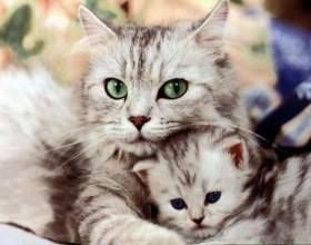 Язык кошек: как понять хвостатого друга фото