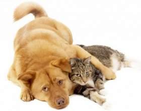 Эффективные способы избавиться от запаха кошки/собаки в квартире фото