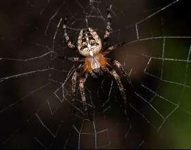 К чему снится паутина с пауками фото