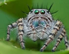 К чему снятся пауки? фото