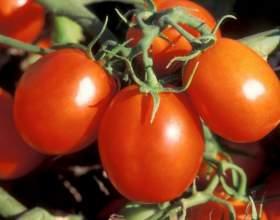 К чему снятся помидоры? фото