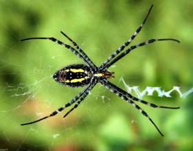 Как бороться с пауками на даче фото
