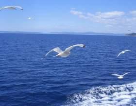 Как будут отмечать всемирный день моря фото