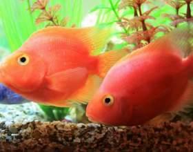 Как часто надо менять воду в аквариуме фото