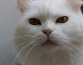 Как дать имя коту фото