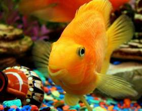 Как мыть грунт в аквариуме фото