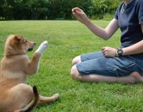 Как держать собаку фото
