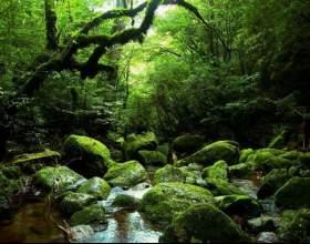 Как добыть воду в лесу фото