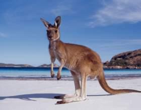 Как долететь до Австралии фото