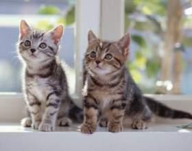 Как должен выглядеть котенок фото