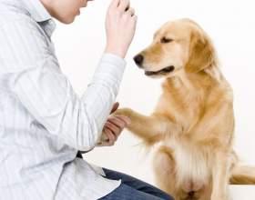 Как дрессировать собак фото