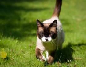 Как двигаются кошки фото