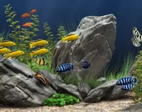 Как фотографировать аквариум фото